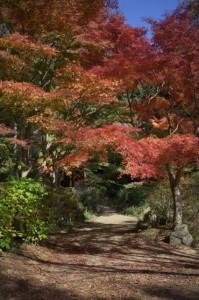 森林植物園2-もみじの道