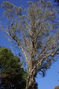 森林植物園5-不気味な木