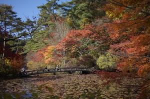 森林植物園6-長谷池の橋