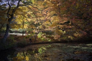 森林植物園7-長谷池