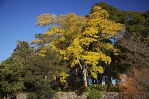 篠山4-篠山城跡神社横の林
