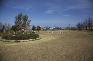 ひまわりの丘公園3