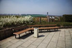 ひまわりの丘公園7